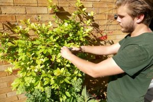 Garden Maintenance Orpington (8)