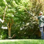 Hayfield Landscapes Gardeners in Orpington (11)