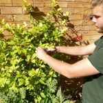 Hayfield Landscapes Gardeners in Orpington (13)
