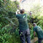Hayfield Landscapes Gardeners in Orpington (14)