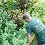 Hayfield Landscapes Gardeners in Orpington (6)